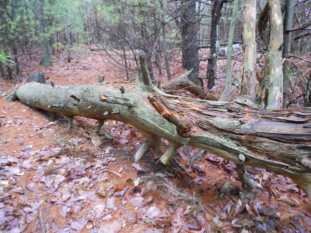 Cool Log at Blue Hills